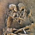 Amanti di Valdaro